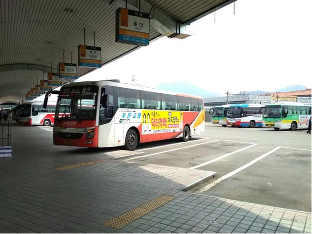 Customs clearance of buses